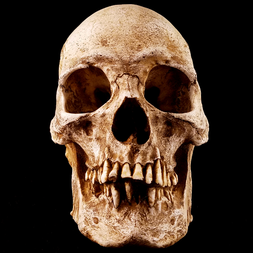 an analysis of skull and jaw Biomechanical analysis of jaw-closing movements additional services and information for journal of dental research can be found at: surface of the skull.
